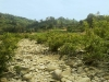 pebble-stone-road-in-bandarban