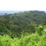 Bandarban Hill