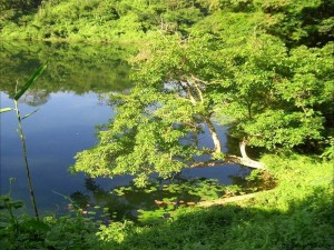Boga Lake Bandarban