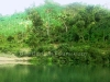 beautiful-jungle-in-bandarban